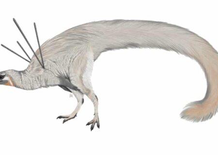کشف، فسیل گونه ای عجیب از دایناسورها