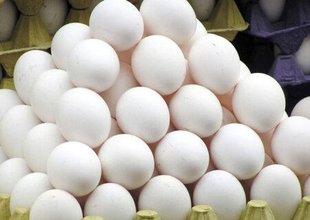جدال بر سر قیمت تخم مرغ ادامه دارد/ حمله تعزیرات به مرغداریها!