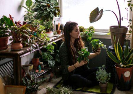 چند مزیت علمی که گیاهان در خانه از آن پشتیبانی می کنند.