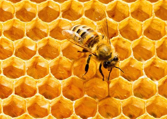 فواید و کاربردهای بره موم زنبور عسل