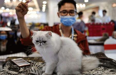 انتقال ویروس کرونا از طریق گربه ها
