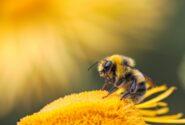 رازهای عجیب زندگی زنبورها
