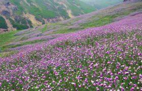 جاذبه های اردبیل؛ شهر طبیعت و تاریخ