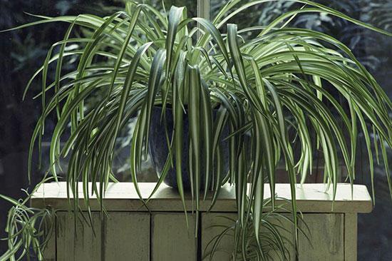 گیاهانی که نیاز به نور ندارند