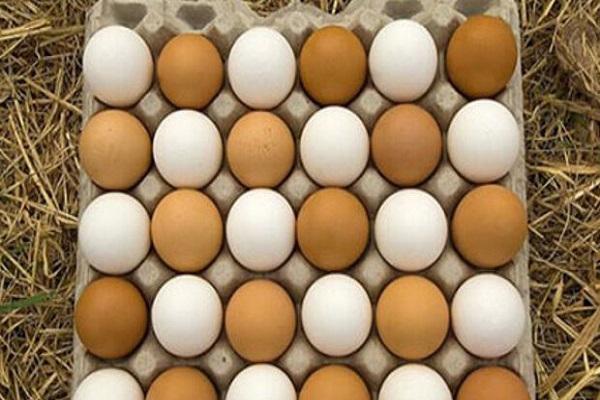 قانون درج قیمت روی تخم مرغ اجرایی شد/ هر دانه؛ ۱۱۰۰ تومان