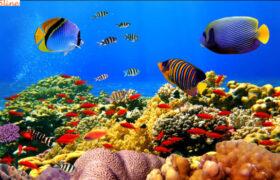به خطر افتادن زندگی جانداران دریایی با سروصدای انسانی