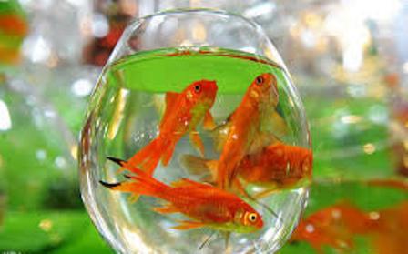 عید کرونایی و ماهی قرمز