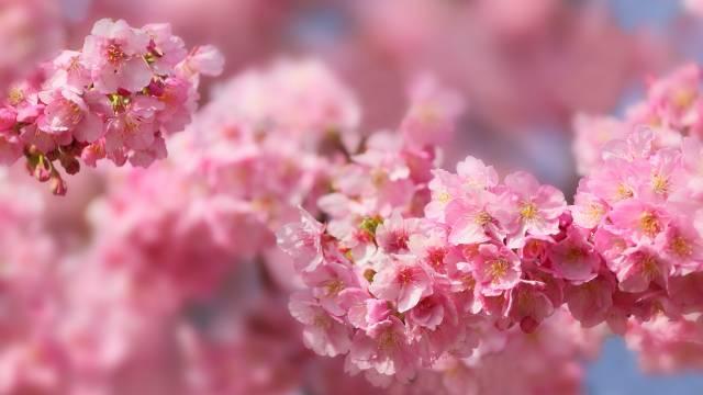 نوروز یک جشن بهاره است که سمبل احیای دوباره ی درختان، گل ها و زمین است.