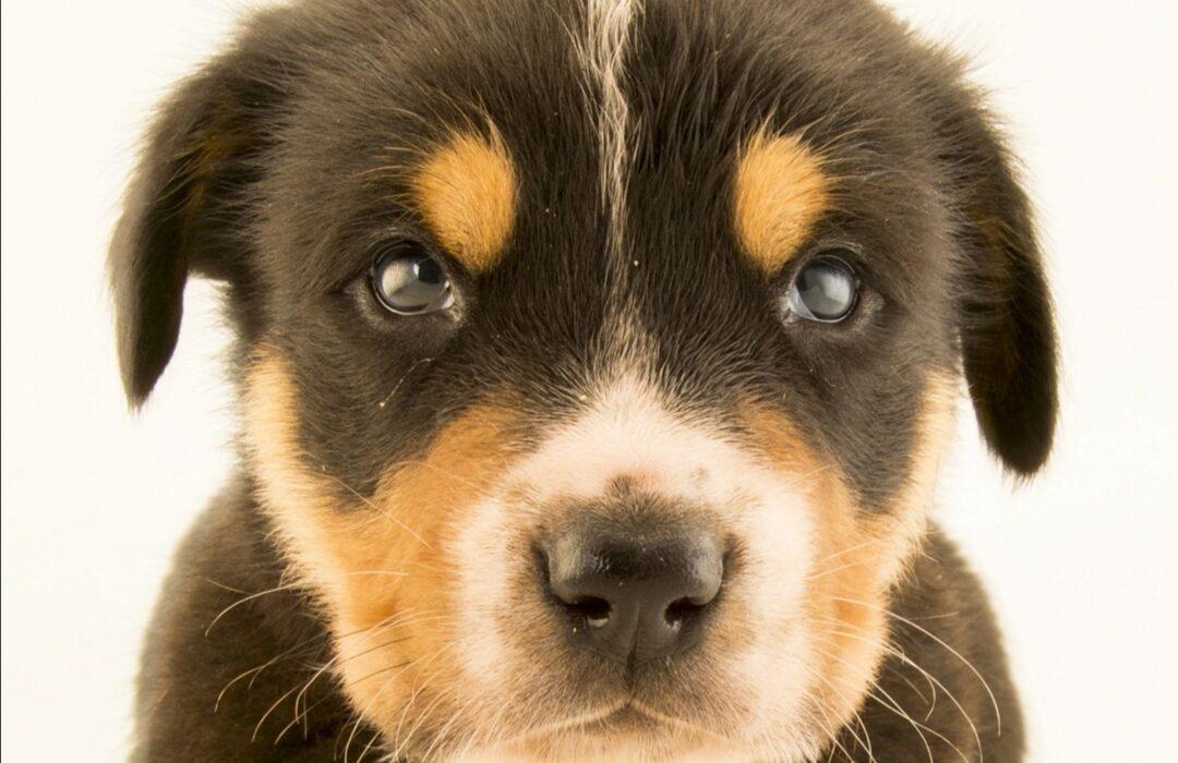 ترس از حیوانات در کودکان/ آموزش تکنیک تصویر درمانی جهت درمان