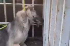دار زدن فجیع سگ ها این بار در تبریز/به همراه فیلم