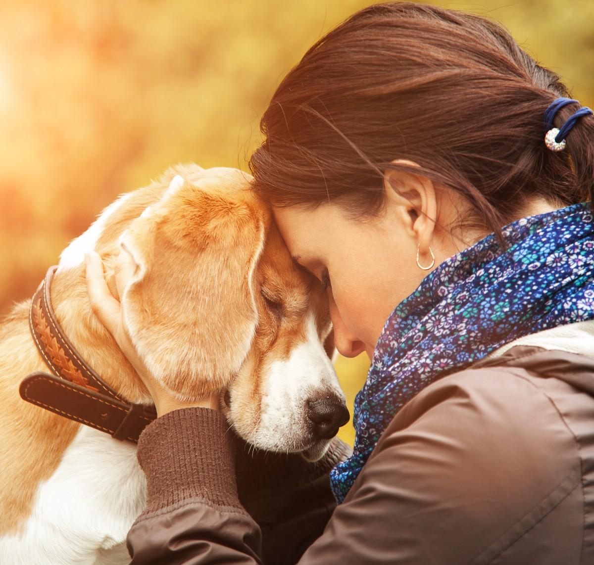 بسیاری افراد، علاقه خاصی به حیوانات خانگی دارند و گاه آن ها را بهتر از هر همدم انسانی برای خود می دانند