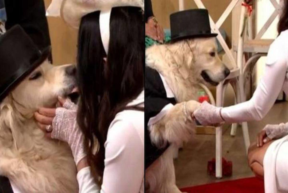 ازدواج زن بریتانیایی با سگ خانگی اش