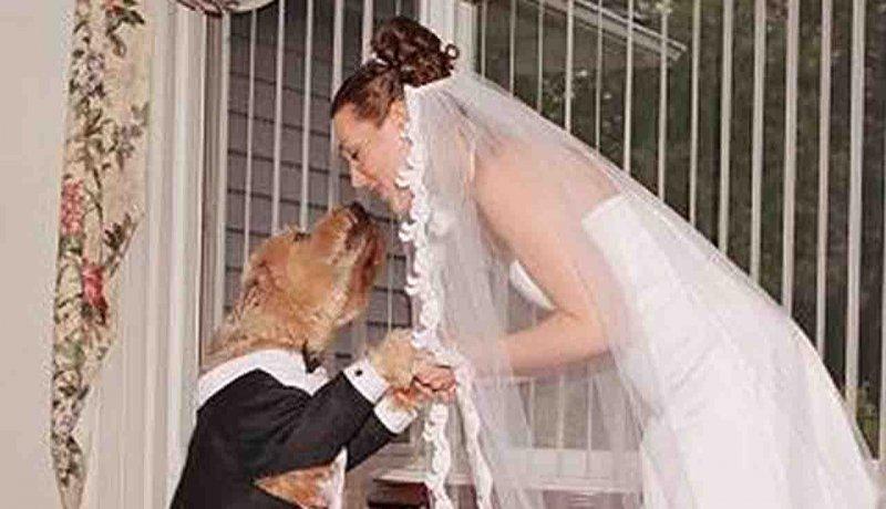 ازدواج با شکوه زن آمریکایی با سگ خود