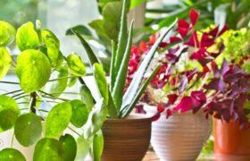 گیاهان آپارتمانی مقاوم/چه گل و گیاهانی در خانه نگهداری کنیم؟