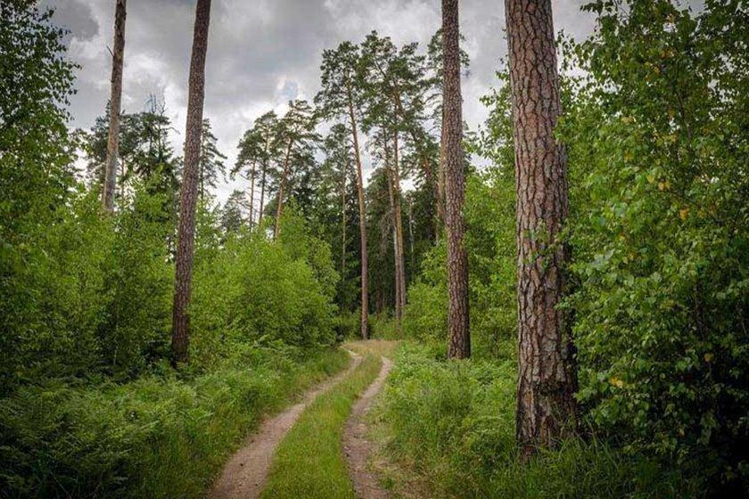 جنگل بیالوویزا/شگفت انگیزترین جنگل های ترسناک باستانی جهان