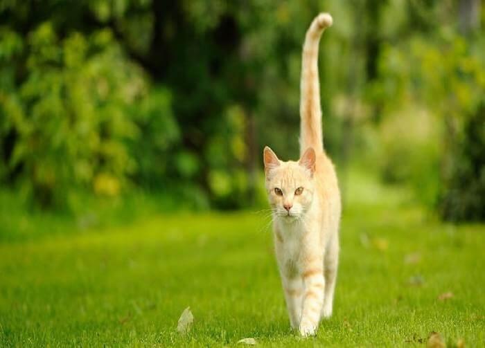 بدن خم شده، با دم جمع شده گربه