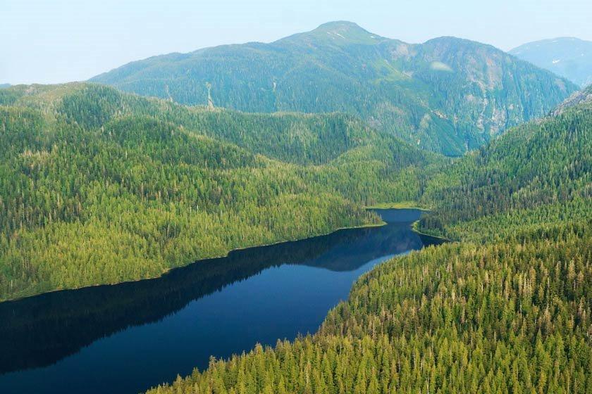 جنگل ملی تونگاس آلاسکا/جنگل های قدیمی