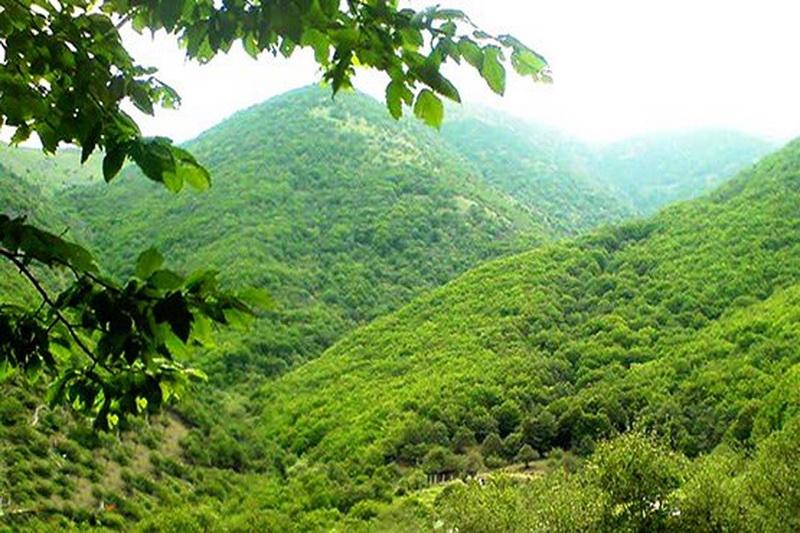 شگفت انگیزترین جنگل های ترسناک باستانی جهان