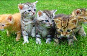 همه چیز درباره گربه ها/دنیای گربه ها را بیشتر بشناسید!