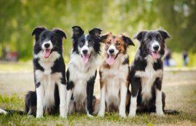 اگر به سگ ها علاقه مندید،این پست را از دست ندهید…