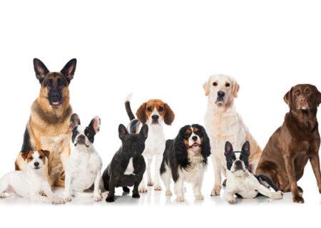 با برترین نژادهای سگ آشنا شوید!