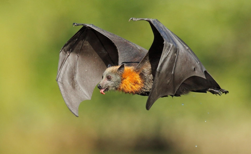 فیلمی از کشف موجود عجیبی با بدن خفاش و سری شبیه به روباه