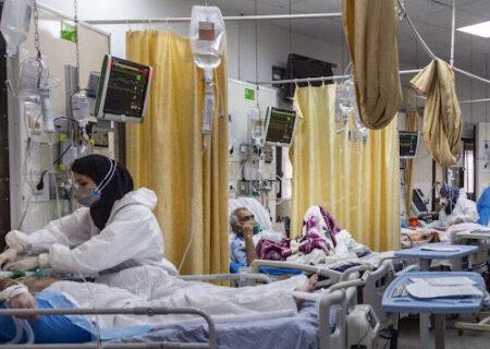 شیوع بیماری قارچ سیاه در تهران/قارچ سیاه چیست؟