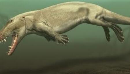 کشف فسیل نهنگ چهارپا: دوزیستی که ۴۳ میلیون سال قدمت دارد!