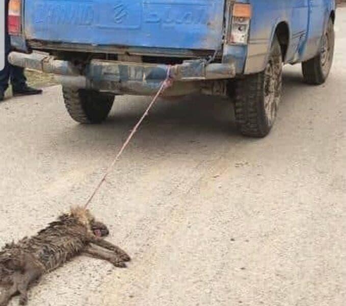 حیوانآزاری در شهرستان نوشهر/دستگیری فرد حیوانآزار با ورود دادستانی